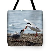 The Courtship Feeding - Series 2 Of 3 Tote Bag