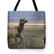 The Cow Elk Tote Bag