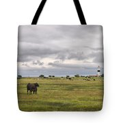 The Cows Of Ottenby 1 Tote Bag