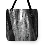 Cypress In The Bayou Tote Bag