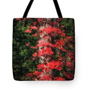 The First Maple Of Autumn Tote Bag
