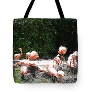 The Flamingos Tote Bag