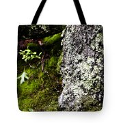 The Forest Floor Bluestone State Park West Virginia Tote Bag