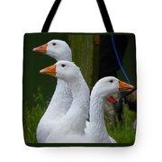 The Fowl Of Borst Park Wa Tote Bag