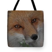 The Fox 4 Upclose Tote Bag