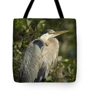 The Gaze - Great Blue Heron - Ardea Hernias Tote Bag