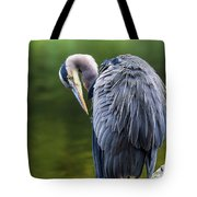 The Great Blue Heron Perched On A Tree Branch Preening Tote Bag