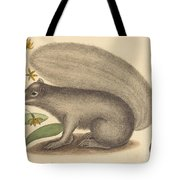 The Grey Fox Squirrel (sciurus Cinereus) Tote Bag