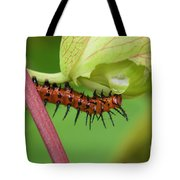 The Gulf Fritillary Caterpillar  Tote Bag