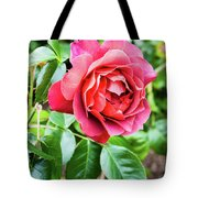The Hot Cocoa Red Rose Tote Bag