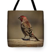 The House Finch Tote Bag