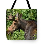 The Hungry Moose Tote Bag