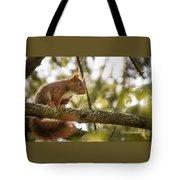 The Hypnotized Squirrel Tote Bag