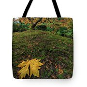 The Japanese Maple Tree In Autumn 2016 Tote Bag