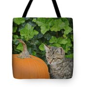 The Kitten And The Pumpkin Tote Bag