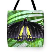 The Largest Butterfly In The World Tote Bag