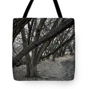 The Leaning Boughs Tote Bag