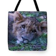 The Lion Cub Tote Bag