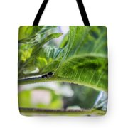 The Lone Ant Tote Bag