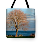 The Lone Maple Tree Tote Bag