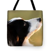 The Look Of A Dog Tote Bag