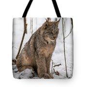 The Lynx Tote Bag