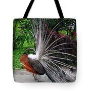 The Many Quills Of A Peacock Tote Bag