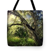 The Mighty Oaks Of Garland Ranch Park 1 Tote Bag