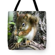 The Most Adorable Baby Squirrel Tote Bag