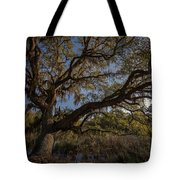 The Oak By The Side Of The Road Tote Bag