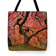 The Old Japanese Maple Tree In Autumn Tote Bag