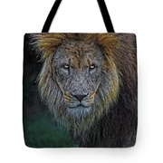 The Old Lion Tote Bag