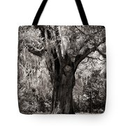 The Old Oak Is Still Standing Tote Bag