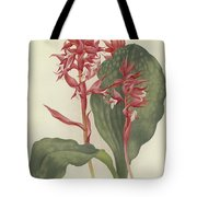 The Outstanding Stenorrhynchos  Tote Bag
