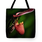 The Pitcher Tote Bag by Elisabeth Van Eyken