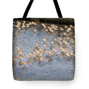 The Plovers Tote Bag
