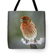 The Red Finch Tote Bag