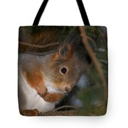 The Red Squirrel 4 Tote Bag