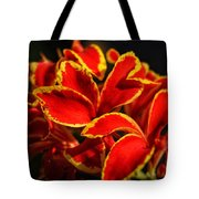 The Reds Of Winter Tote Bag