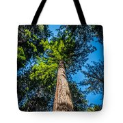 the Redwoods of Muir Woods Tote Bag
