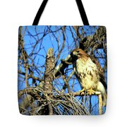 The Search Red Tail Hawk Art Tote Bag