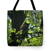 The Shy Owl Tote Bag