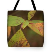 The Soft Intensity Of Fall 6210 H_2 Tote Bag