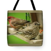 Two Finch's Tote Bag
