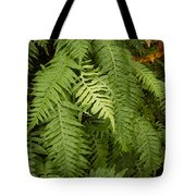 The Standout Fern Tote Bag
