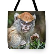 The Stare A Baby Patas Monkey  Tote Bag