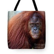 The Staring Contest Tote Bag