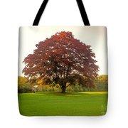 The Storybook Tree Tote Bag