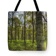 The Sun Touched Forest Tote Bag