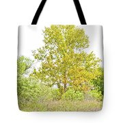 The Sycamore Tote Bag